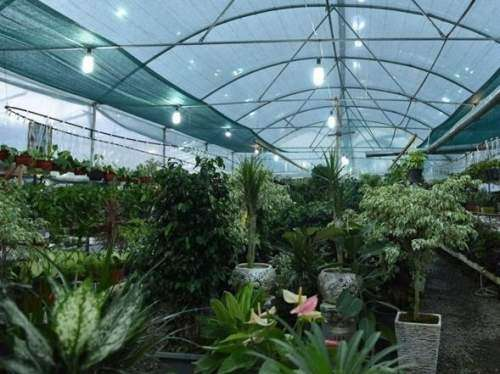 گفتگو با صاحب یک گلخانه دار (درآمد بالا و سرمایه کم )
