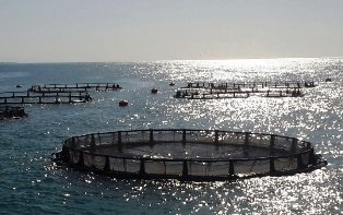 کسب و کار پرورش ماهی در قفس های دریایی و اقتصاد مقاومتی