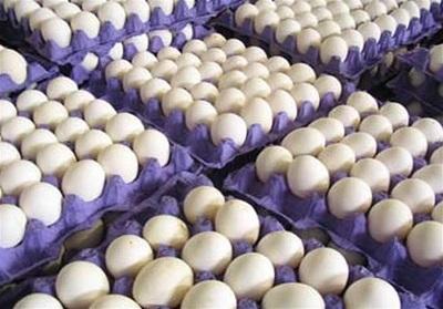 تخم مرغ شانهای 12500 تومان شد دی 96
